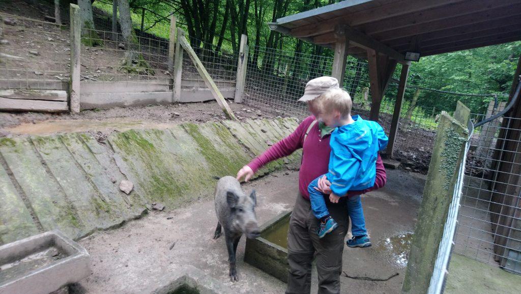 Wildschweingehege im Ökologisches Beobachtungsgehege Walldürn